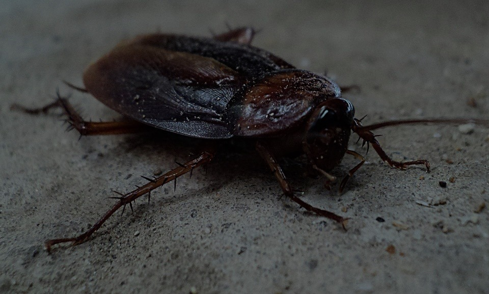 Cómo acabar con las cucarachas